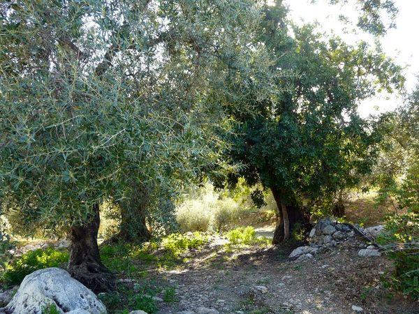 Baum Medizin - Auszeit Andalusien