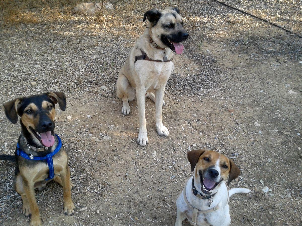 Max, Hugo, Benny - Hundekumpels